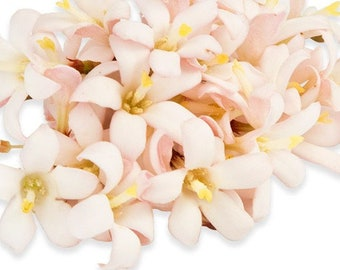JASMINE BLOOMS Edible Garnish Cake Decoration and Beautiful Strong Fragrance 100 Edible Flower