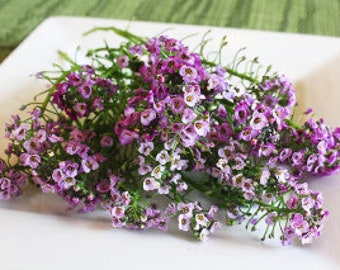 Alyssum Micro Flowers Fresh, Edible Flowers, Salads, Baking, Drink Toppers, Cupcake Toppers, Cake Decorations 50, Edible Flowers,