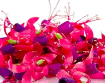 EDIBLE FLOWER FUCHSIA, 50 Organic Edible Flowers, Pink , Purple, Salads Garnishes, Drinks,