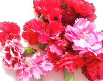 EDIBLE FLOWERS Miniature CARNATIONS, Fresh Small Carnation Flowers, Red, Pink, White, Flowers, Bulk, Salad Topper, Wedding Cakes,