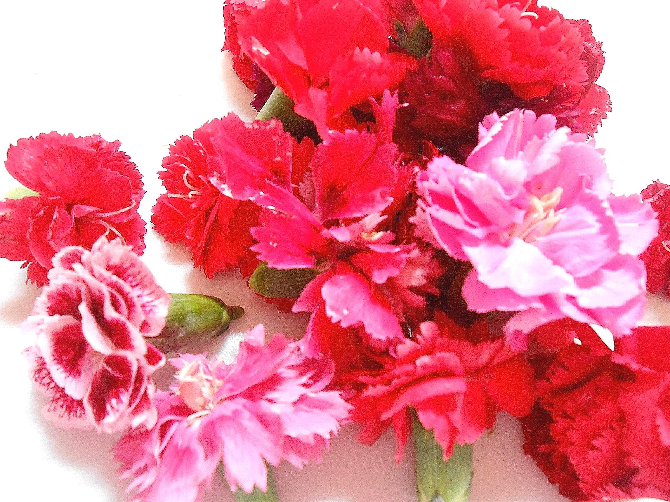 Edible Flowers Miniature Carnations Fresh Small Carnation