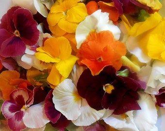 EDIBLE FLOWERS PANSIES Bright Color Collection Fresh, Edible, Salads, Baking, Drink Toppers, Cupcake Toppers, Cake Decorations 35