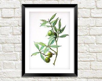 GREEN OLIVES PRINT: Vintage Olive Art Illustration Wall Hanging (A4 / A3 Size)