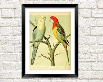 PARROTS PRINT: Vintage Bird Art Illustration Wall Hanging (A4 / A3 Size)