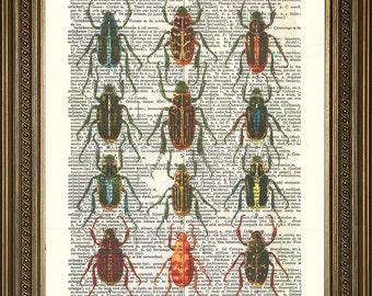"BUGS INSECT ART Print: Vintage Beetles Print (8 x 10"")"