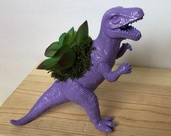 Purple T-Rex Succulent Planter