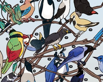 Bird Coloring Poster: Corvidae (Crows, Magpies, Jays)