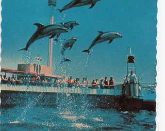 Marineland of the Pacific Palos Verdes Peninsula Dolphins Jumping Scalloped Vintage Postcard Souvenir Sea Circus