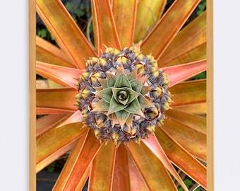 Pineapple Plant Photo Print - Unframed - Original Flower Plant Modern Photography Image