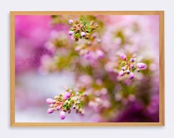 Pink Flowers Photo Print - Unframed - Original Modern Photography Image