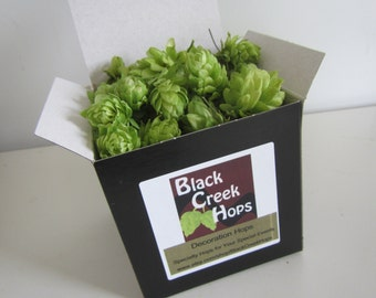 Decoration Hops - 40 Dried  Hops Flowers, DIY Beer Flowers - Brewery Wedding  Decorations
