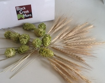 Complete DIY Boutonniere Hops Kit -12 Dried Hops + 20 Rye Stalks , Hops & Rye Boutonniere -  Beer Boutonniere Kit - Brewery Wedding Flowers