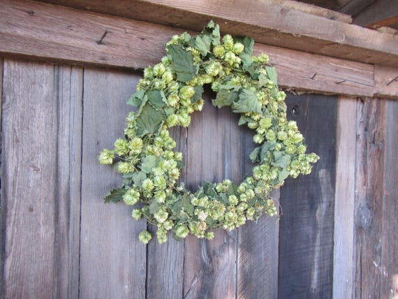 Hops Wreath Direct From The Farm Natural Hops Wreath 15 Inch Etsy