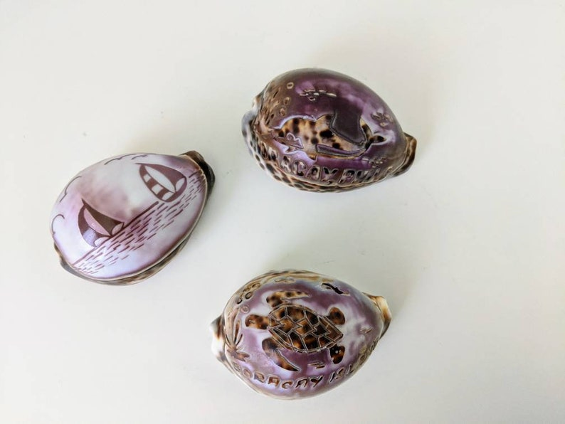 Sea Turtle Etched and Polished Tiger Cowrie Shells from Philippines Boracay Island and Dolphin Set of Three Sailboats
