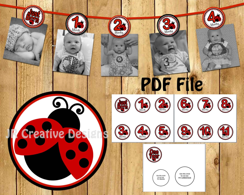 Ladybug 12 Month Photo Banner 1st Birthday 1 Year