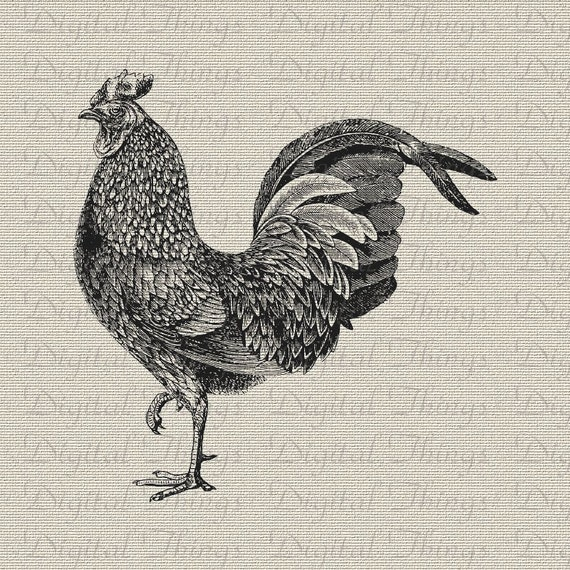 Chicken Rooster Eggs To Market Kitchen Decor Art Wall Decor Art Digital Download for Iron on Transfer to Tea Towel Fabric Pillows DT1426