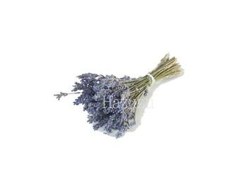 Lavendel Blume Kraut Jahrgang Botanische Druck Pflanze Png Etsy