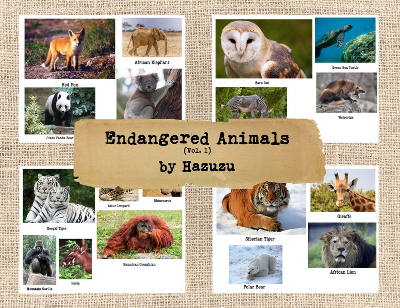Endangered Species Animals Bundle 7 Pages collage sheets ...