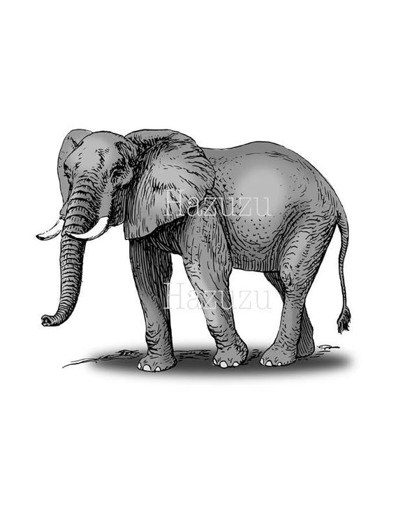 Elephant Png Clip Art Vintage Circus Transparent Background Etsy Over 411 elephant png images are found on vippng. etsy