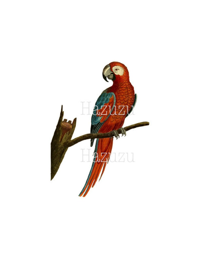 PARROT PNG colourful vintage clip art transparent background digital stamp  instant download collage journal scrapbooking