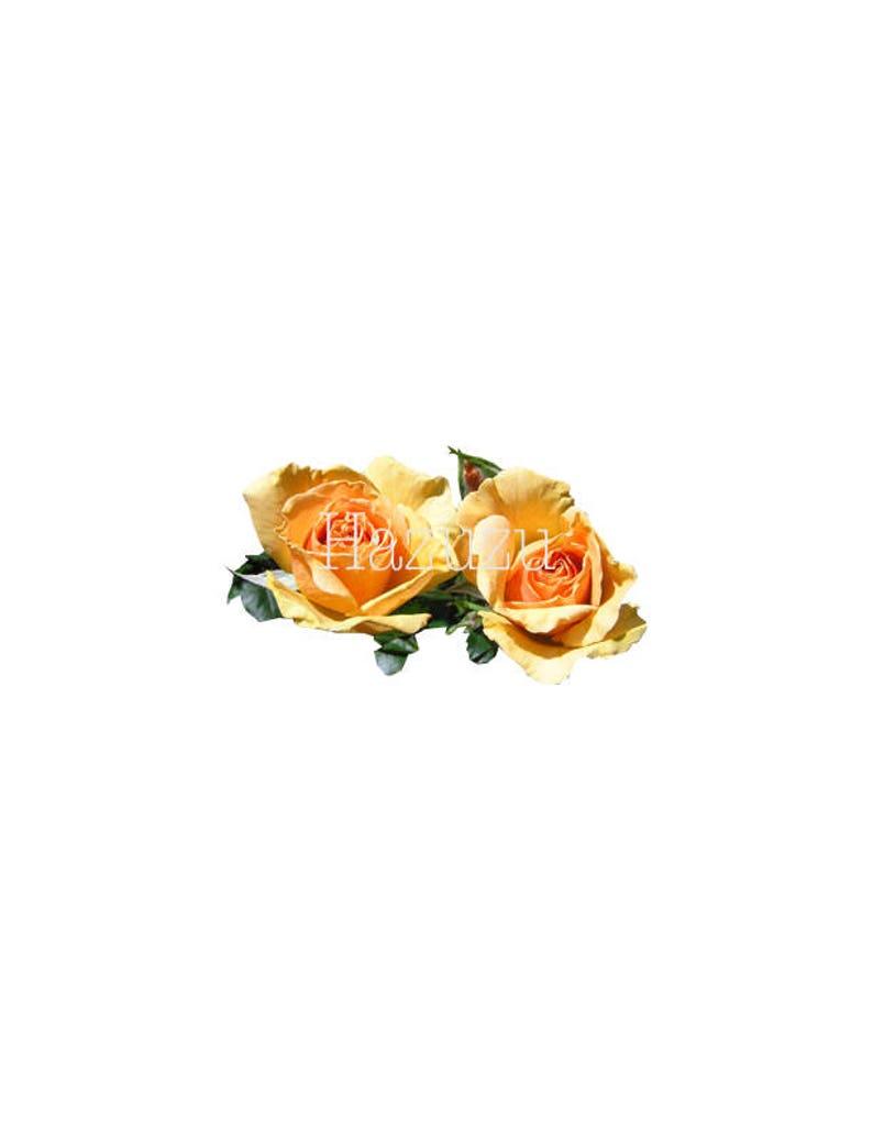Yellow Rose Flower Roses Vintage Botanical Print Plant Png Etsy