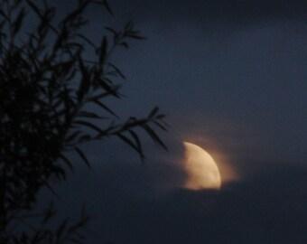 Willow Moon, waxing moon print, silver moon photograph , golden moon art, navy gold black print, 1st quarter moon, willow tree sillhouette,
