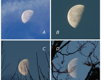 Your choice, Waning Moon 50%, third quarter, white half moon through trees photograph, blue sky white clouds, silver moon phase photo