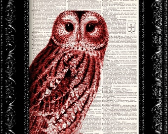 Ruby Red Owl - Vintage Dictionary Print Vintage Book Print Page Art Upcycled Vintage Book Art