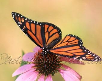 Monarch Butterfly II Digital Download, Butterfly Photography, Nature Photography, Butterfly Wall Art, Digital Image, Monarch on Coneflower