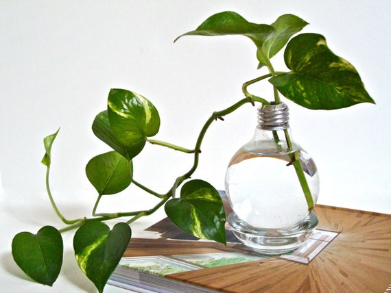 Etsy & Lightbulb Vase with Clear Base / Light Bulb Home Decor Repurposed Glass Light Bulb Vase Upcycled Glass Lightbulb Vase (Without Plant)