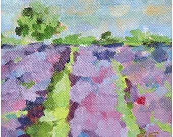 Lavender Fields No. 1 Fine Art Print On Canvas