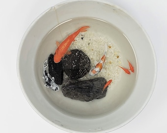 Koi Fish in a Large Bowl