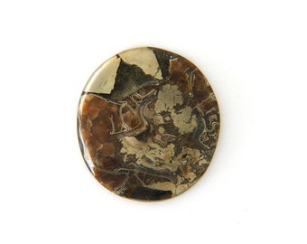 Fossil Ammonite with Natural Pyrite Druzy Designer Cabochon Gemstone 48.2x52.2x9.0 mm Free Shipping Free Returns