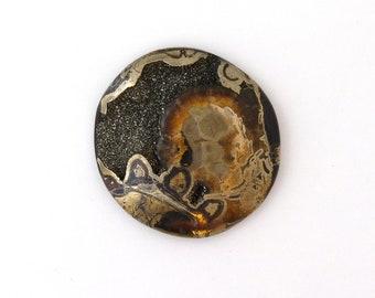 Natural Ammonite Fossil Pyrite Designer Cabochon 49.4x52.0x10.2 mm Free Shipping Free Returns