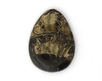 Gemstone Fossils