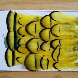 Feather Fly Tying Material. Fl Loose... Lady Amherst .. Color. Lemon Yellow... Feather.