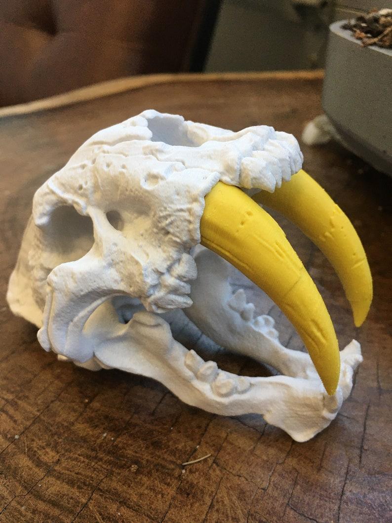 3D Printed Sabertooth Tiger Smilodon Skull image 0