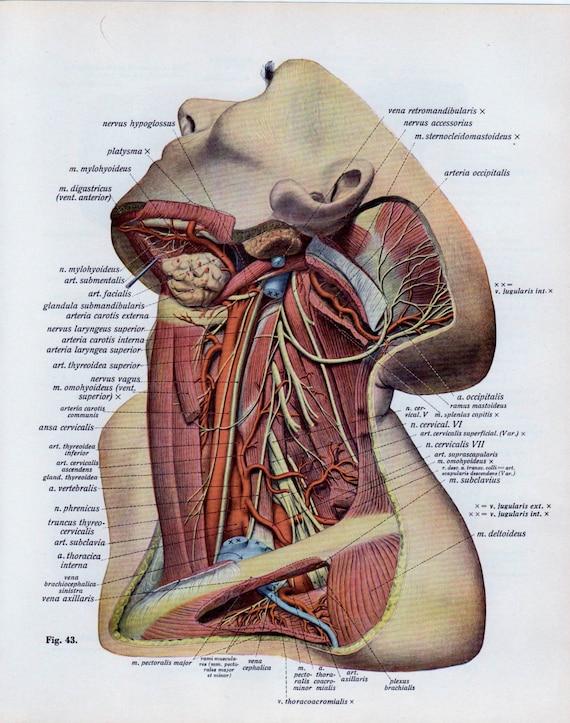 Ähnliche Artikel wie Vintage medizinische Seite menschlichen ...