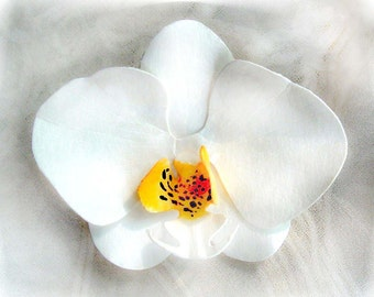 White Phalaenopsis Orchid Pin