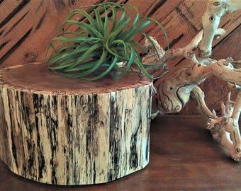 Rustic tree stump - Centerpiece - Wood tree slice - Wedding Centerpiece - Home decor - Candleholder - Plant stand - Pedestal