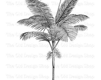 Tree illustration etsy palm tree clip art vintage printable botanical ptychosperma cunninghamiana illustration digital download png jpg image thecheapjerseys Gallery