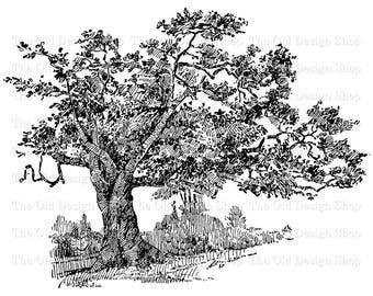 Pine tree clip art vintage printable botanical pinus etsy vintage charter oak tree illustration commercial use botanical clip art digital download transfer image png jpg formats thecheapjerseys Gallery