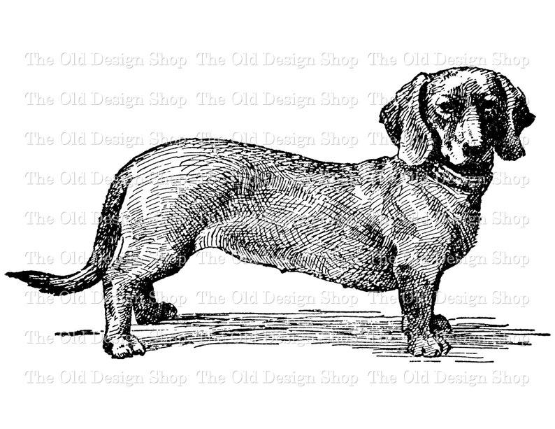 Dachshund Commercial Use Clip Art Illustration Digital Stamp image 0