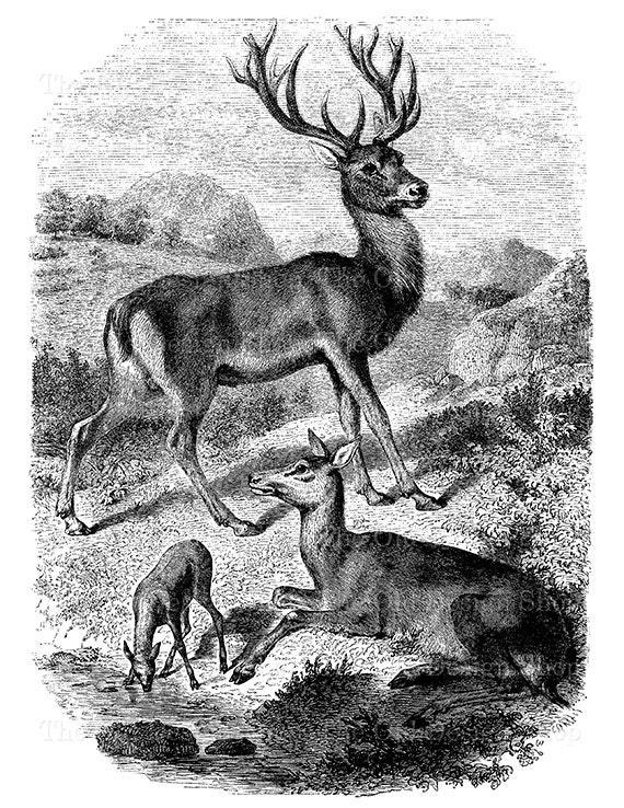Deer Clip Art Vintage Forest Animal Illustration Digital ...