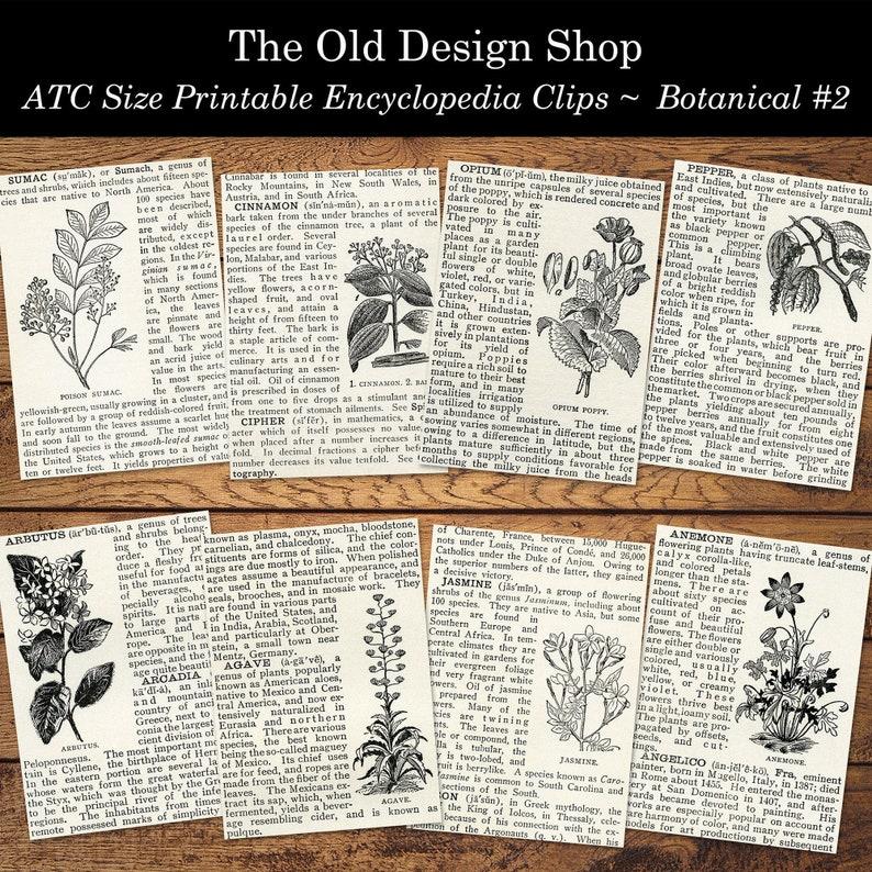 Set 2 Botanical Vintage Encyclopedia Clips Printable ATC Size image 0