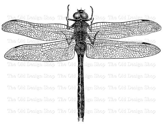 graphic regarding Dragonfly Printable called Clip Artwork Basic Dragonfly Printable Example Electronic Stamp Move Picture