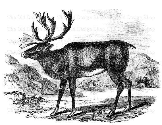 Reindeer Deer Clip Art Printable Vintage Animal ...