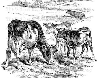 Cow Calf Vintage Farm Animal Clip Art Digital Stamp Transfer Image