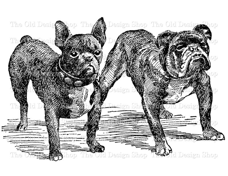 French Bulldog English Bulldog Commercial Use Clip Art image 0