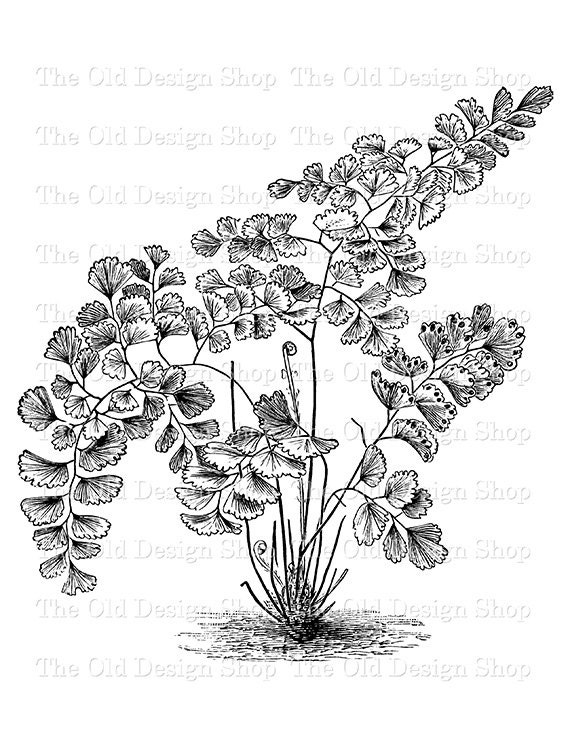 vintage coloring pages etsy - photo#43